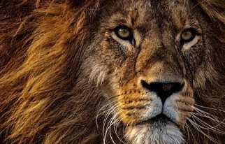 10 lines about about lion in Gujarati