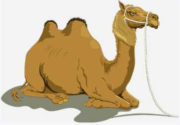 Amazing Information About Camel in Gujarati