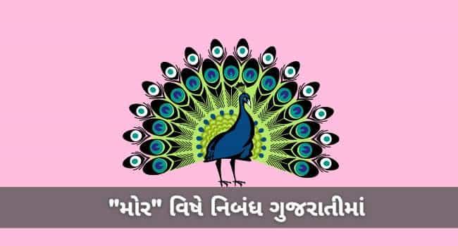 Best Peacock Essay in Gujarati મોર વિષે ગુજરાતીમાં નિબંધ